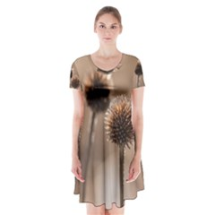 Withered Globe Thistle In Autumn Macro Short Sleeve V-neck Flare Dress