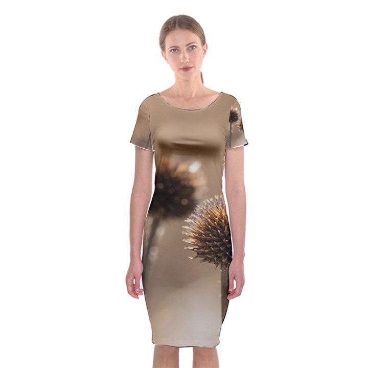 Withered Globe Thistle In Autumn Macro Classic Short Sleeve Midi Dress