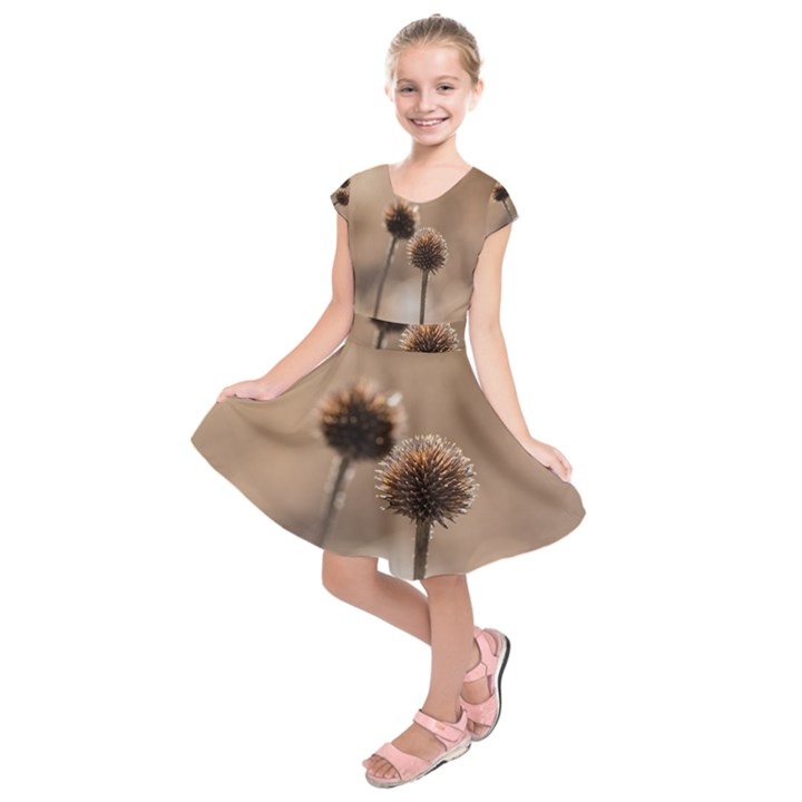Withered Globe Thistle In Autumn Macro Kids  Short Sleeve Dress