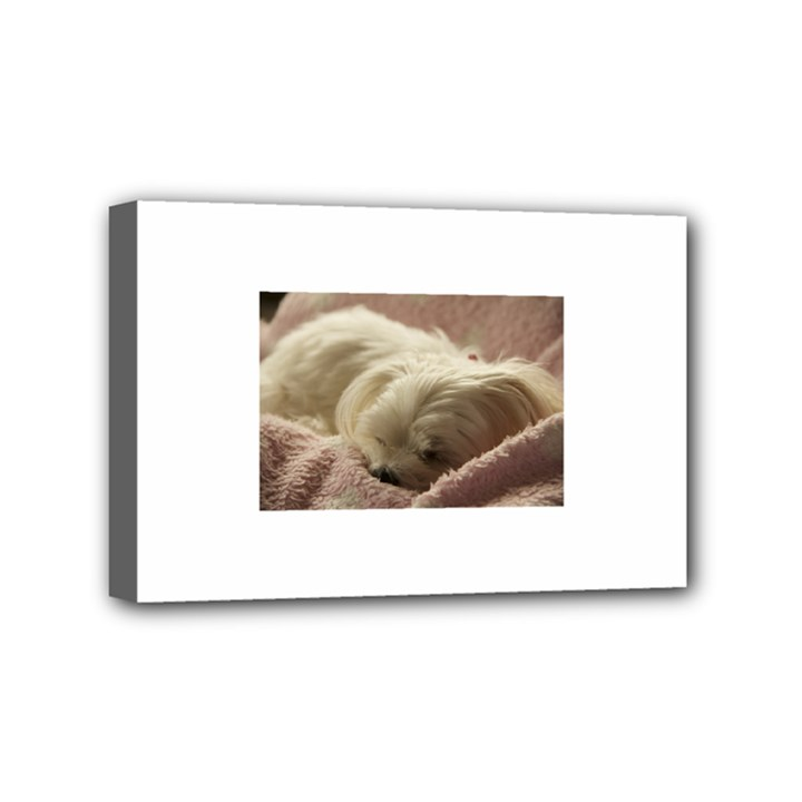 Maltese Sleeping Mini Canvas 6  x 4