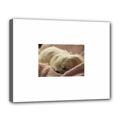 Maltese Sleeping Canvas 14  x 11