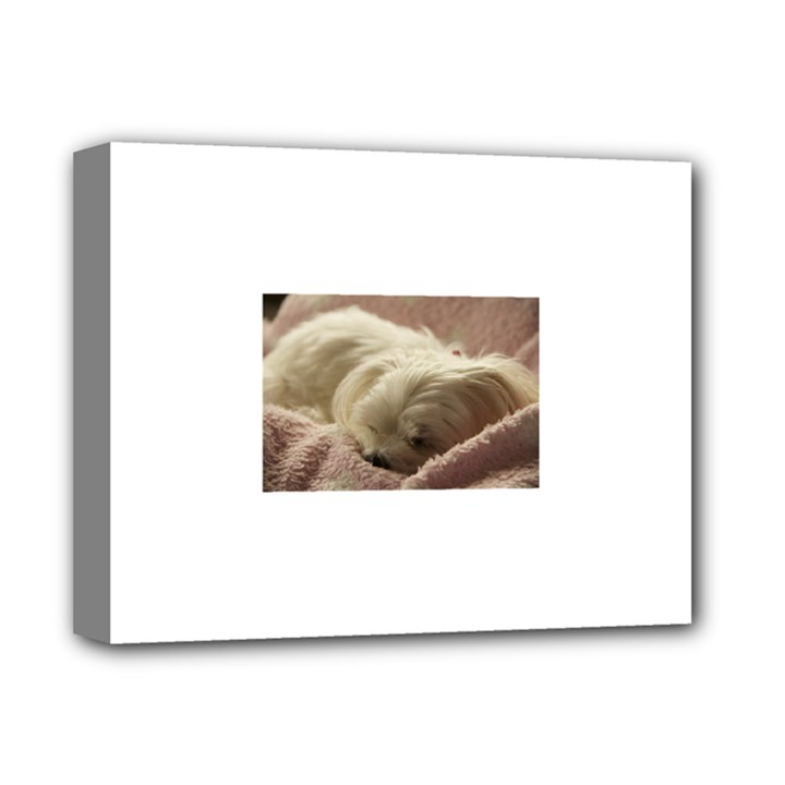 Maltese Sleeping Deluxe Canvas 14  x 11