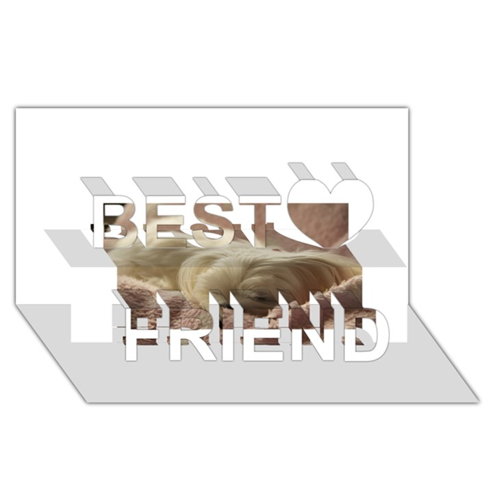 Maltese Sleeping Best Friends 3D Greeting Card (8x4)