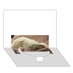 Maltese Sleeping Circle Bottom 3D Greeting Card (7x5)