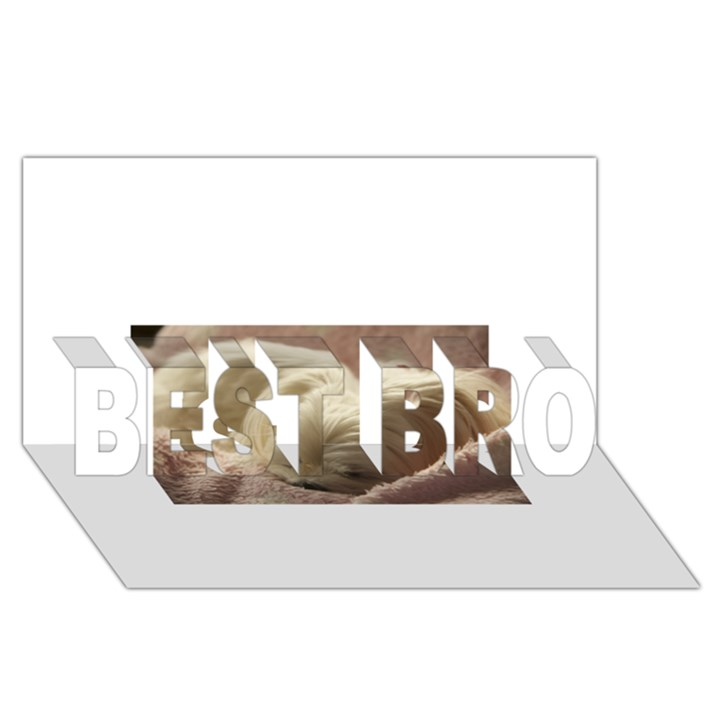 Maltese Sleeping BEST BRO 3D Greeting Card (8x4)