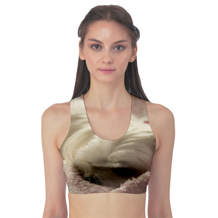 Maltese Sleeping Sports Bra