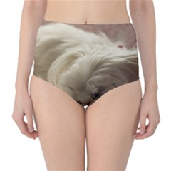 Maltese Sleeping High-Waist Bikini Bottoms