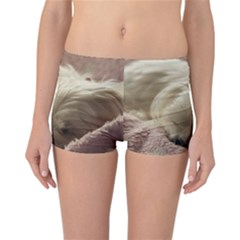 Maltese Sleeping Reversible Boyleg Bikini Bottoms
