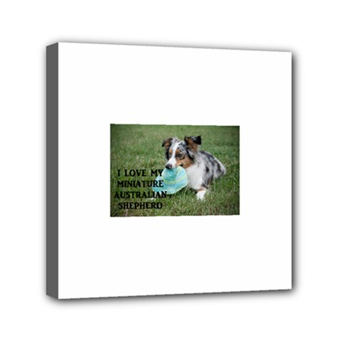 Blue Merle Miniature American Shepherd Love W Pic Mini Canvas 6  x 6