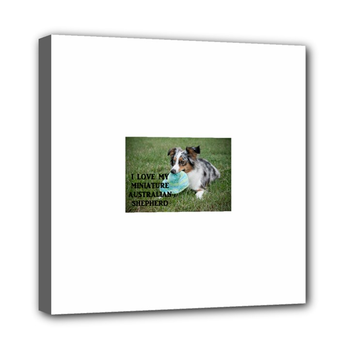 Blue Merle Miniature American Shepherd Love W Pic Mini Canvas 8  x 8