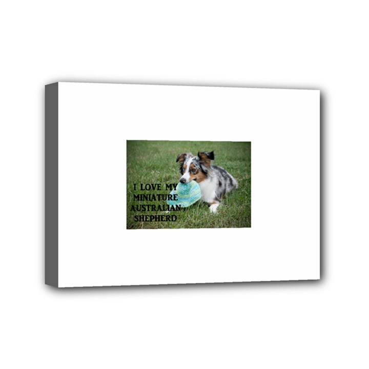 Blue Merle Miniature American Shepherd Love W Pic Mini Canvas 7  x 5