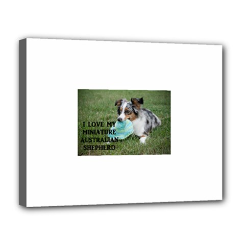 Blue Merle Miniature American Shepherd Love W Pic Canvas 14  x 11