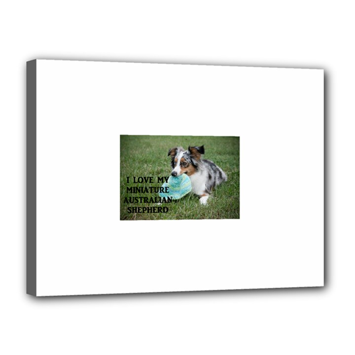 Blue Merle Miniature American Shepherd Love W Pic Canvas 16  x 12