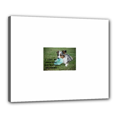 Blue Merle Miniature American Shepherd Love W Pic Canvas 20  x 16