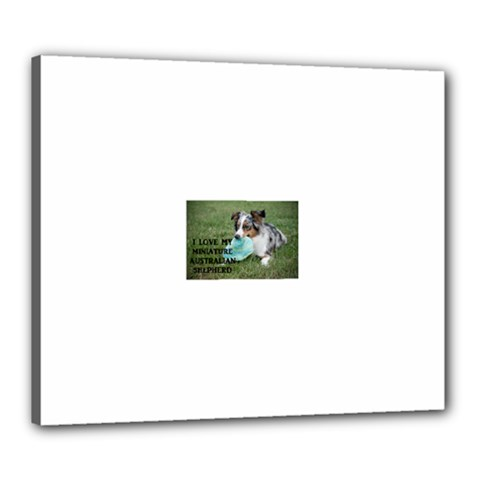Blue Merle Miniature American Shepherd Love W Pic Canvas 24  x 20