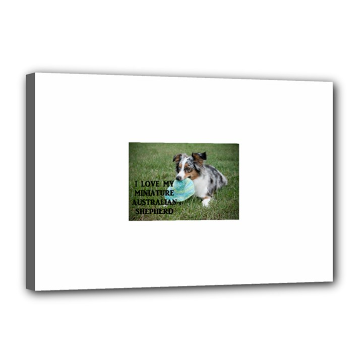 Blue Merle Miniature American Shepherd Love W Pic Canvas 18  x 12
