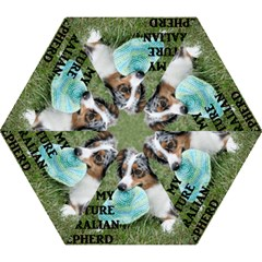 Blue Merle Miniature American Shepherd Love W Pic Mini Folding Umbrellas