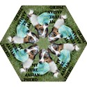 Blue Merle Miniature American Shepherd Love W Pic Mini Folding Umbrellas View1