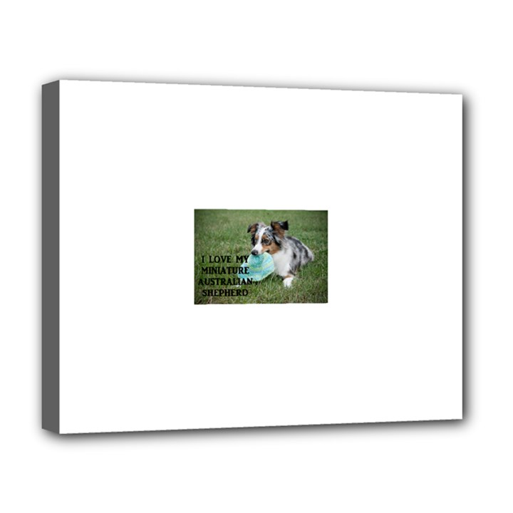 Blue Merle Miniature American Shepherd Love W Pic Deluxe Canvas 20  x 16