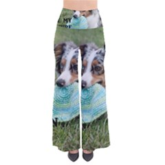 Blue Merle Miniature American Shepherd Love W Pic Pants