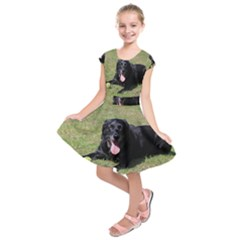 Black Lab Laying with toy Kids  Short Sleeve Dress