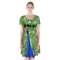 Bird Peacock Short Sleeve V Neck Flare Dress