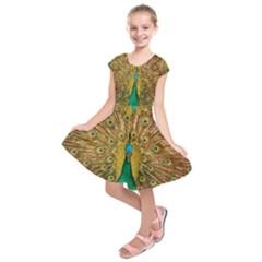 Bird Peacock Feathers Kids  Short Sleeve Dress