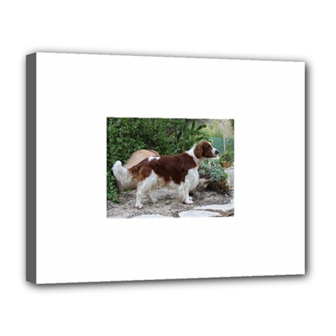 Welsh Springer Spaniel Full Canvas 14  x 11