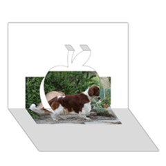 Welsh Springer Spaniel Full Apple 3D Greeting Card (7x5)