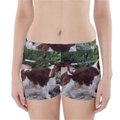 Welsh Springer Spaniel Full Boyleg Bikini Wrap Bottoms