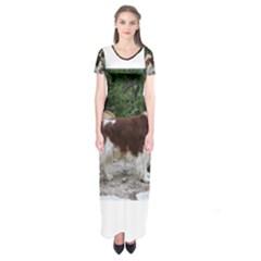 Welsh Springer Spaniel Full Short Sleeve Maxi Dress