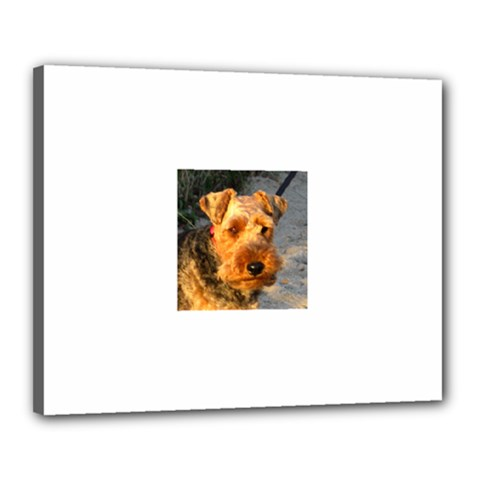 Welch Terrier Canvas 20  x 16