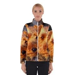 Welch Terrier Winterwear