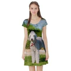Bedlington Terrier Full Short Sleeve Skater Dress