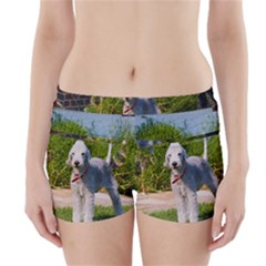 Bedlington Terrier Full Boyleg Bikini Wrap Bottoms
