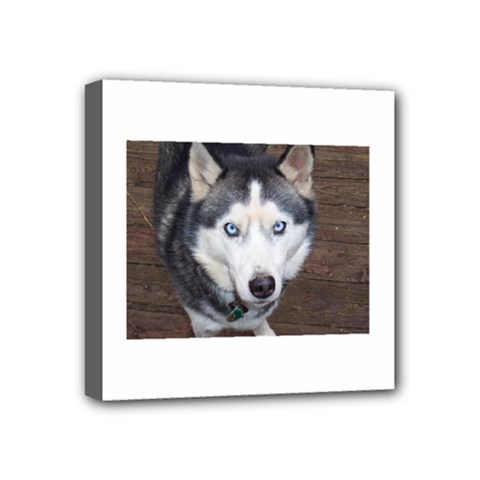Siberian Husky Blue Eyed Mini Canvas 4  x 4
