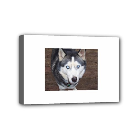 Siberian Husky Blue Eyed Mini Canvas 6  x 4