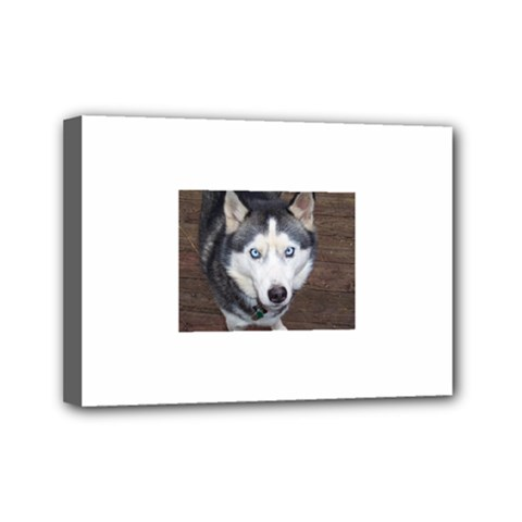 Siberian Husky Blue Eyed Mini Canvas 7  x 5