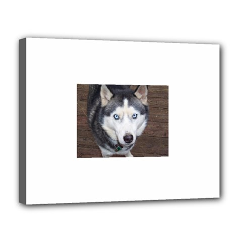 Siberian Husky Blue Eyed Canvas 14  x 11