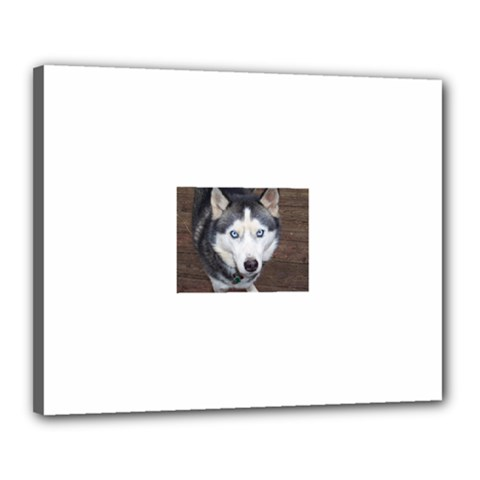 Siberian Husky Blue Eyed Canvas 20  x 16