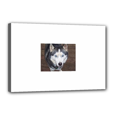 Siberian Husky Blue Eyed Canvas 18  x 12