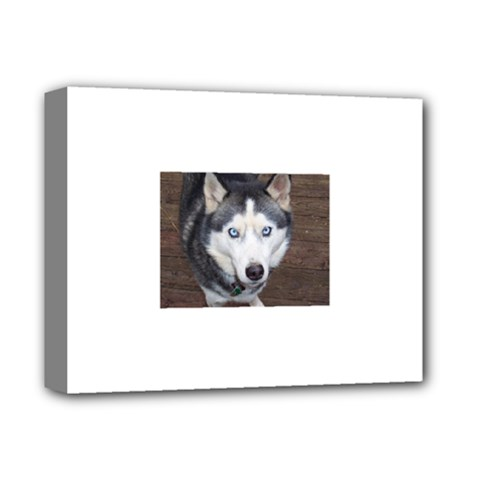 Siberian Husky Blue Eyed Deluxe Canvas 14  x 11