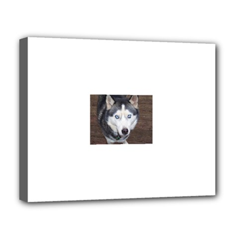 Siberian Husky Blue Eyed Deluxe Canvas 20  x 16