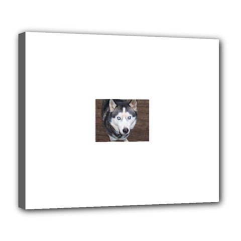 Siberian Husky Blue Eyed Deluxe Canvas 24  x 20