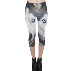 Siberian Husky Blue Eyed Capri Leggings