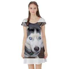 Siberian Husky Blue Eyed Short Sleeve Skater Dress