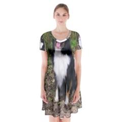 Australian Shepherd Black Tri Sitting Short Sleeve V-neck Flare Dress