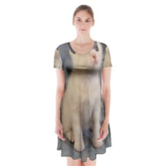 American Shorthair Kitten Short Sleeve V-neck Flare Dress