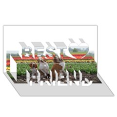 Bracco Italiano Group Best Friends 3D Greeting Card (8x4)