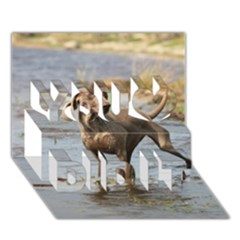 Weimaraner In Water You Did It 3D Greeting Card (7x5)
